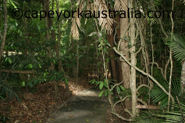 kuranda jungle