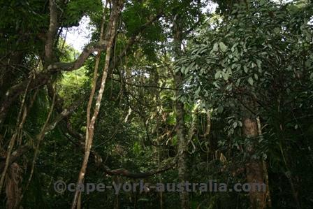 kuranda rainforest