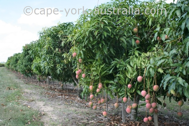 mareeba farms