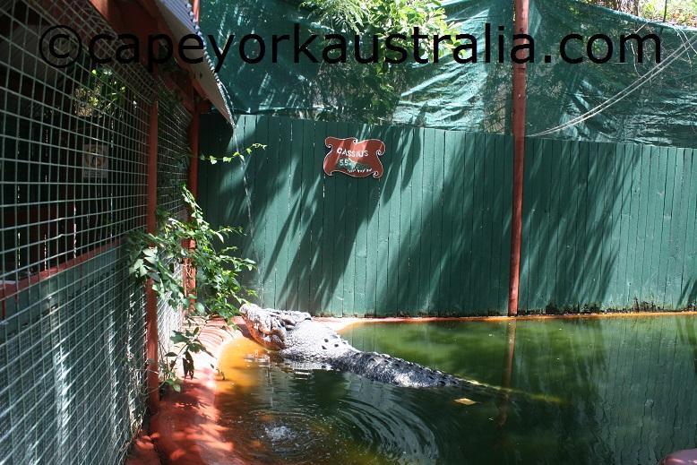 marineland melanesia crocodile cage