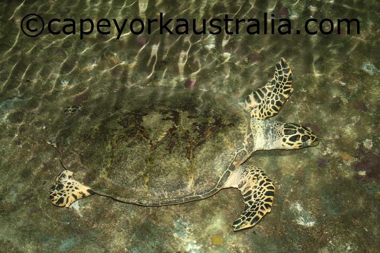 marineland melanesia turtle