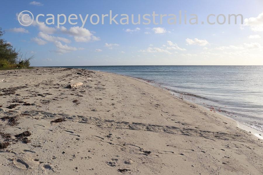 masig island west point turtle tracks