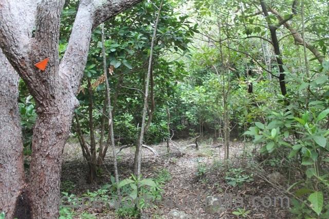 mount cook national park rainforest