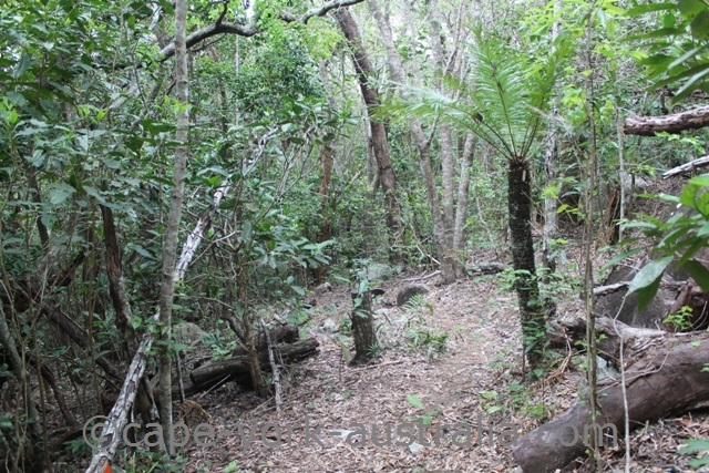 mount cook national park walking track