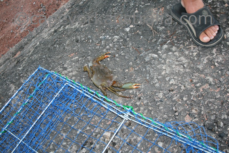 mud crab net