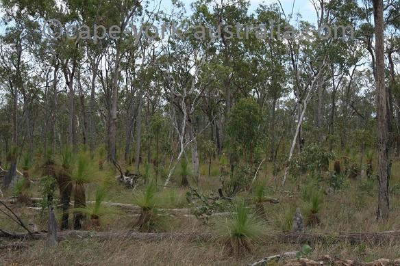 oyala thumotang vegetation