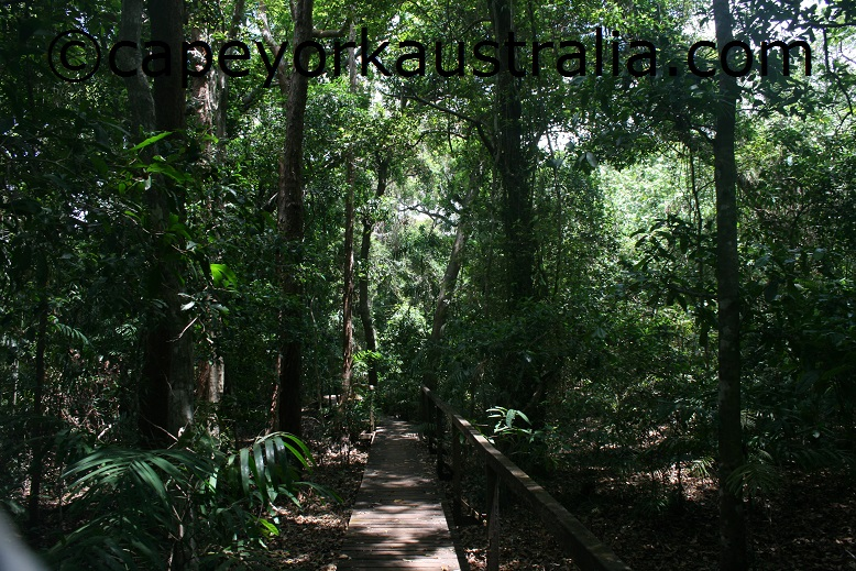 pajinka rainforest walkway
