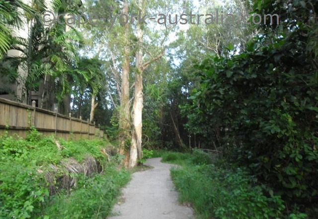 palm cove walking path