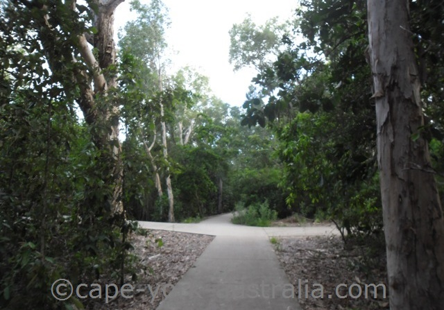 palm cove walking paths