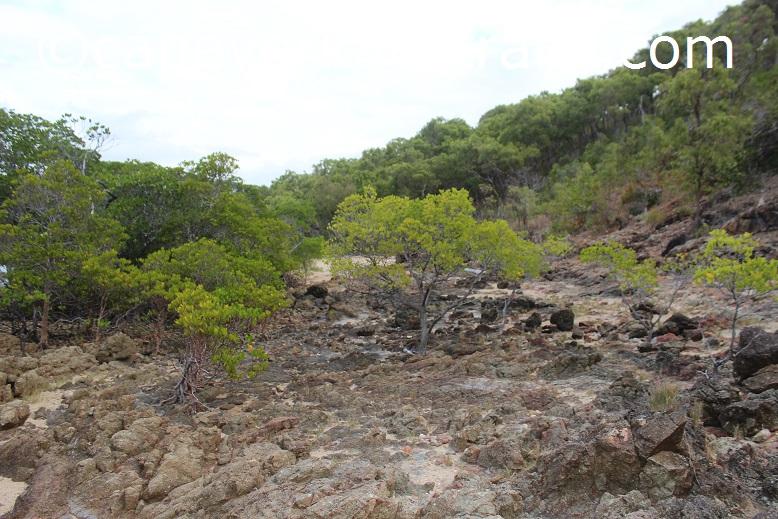 peak point mangroves
