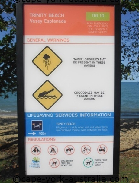 poisonous jellyfish