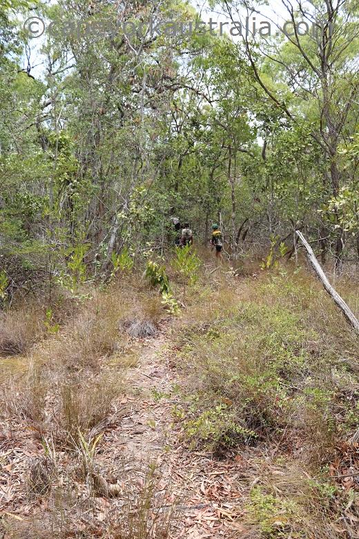 pow bush walk