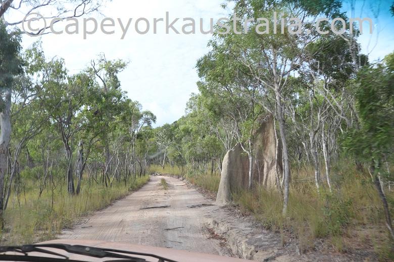 roma flats crocodile creek track termite mound
