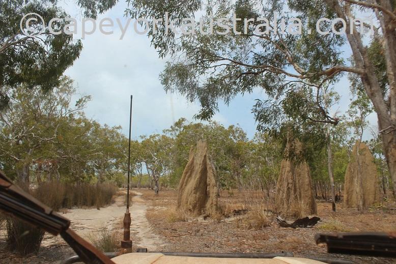 roma flats crocodile creek track temite mounds