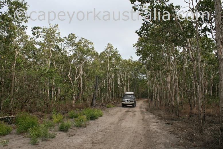 running creek track open woodland