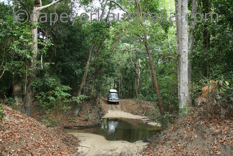 running creek track rainforest