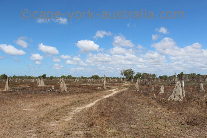 silver plains termite mounds