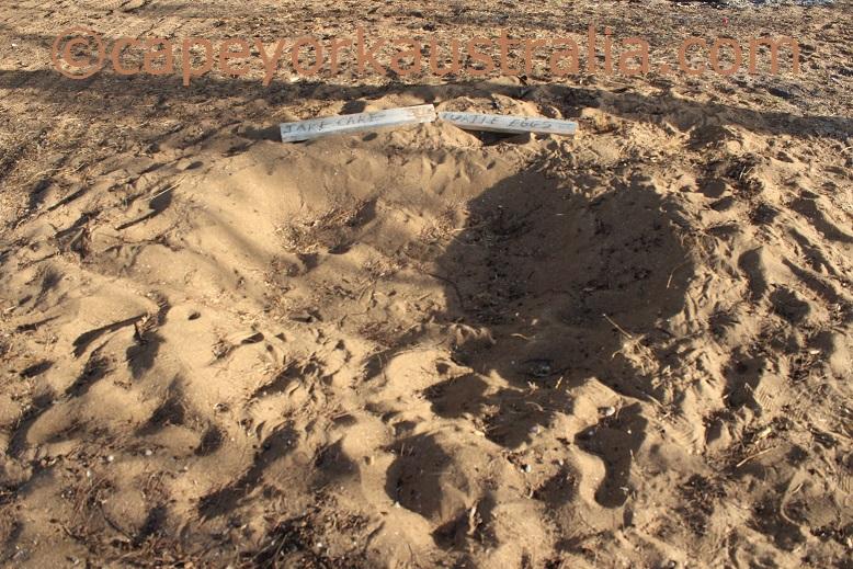 skardon river turtle nest