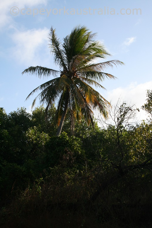 somerset coconut plantation