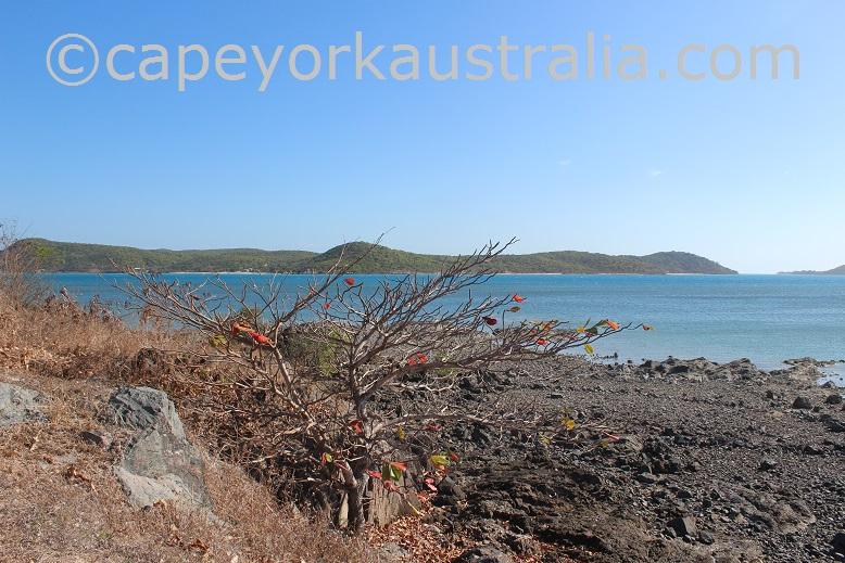 thursday island mangrove walk