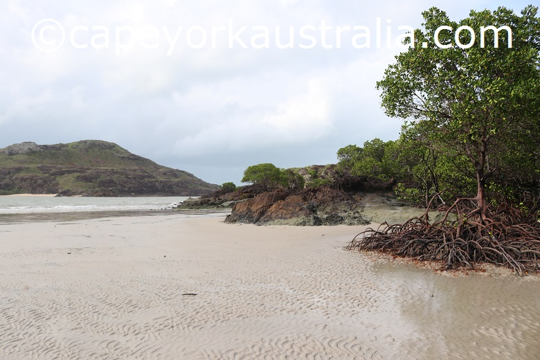 tip of australia bottom walk mangroves