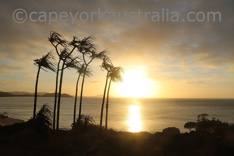 tip of australia sunset palms