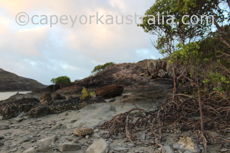 tip of australia walk mangroves