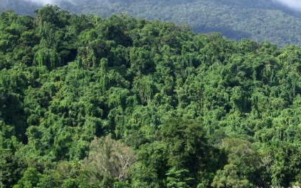 tropical rainforest before cyclone
