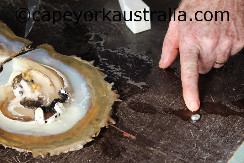 turtle head island pearl