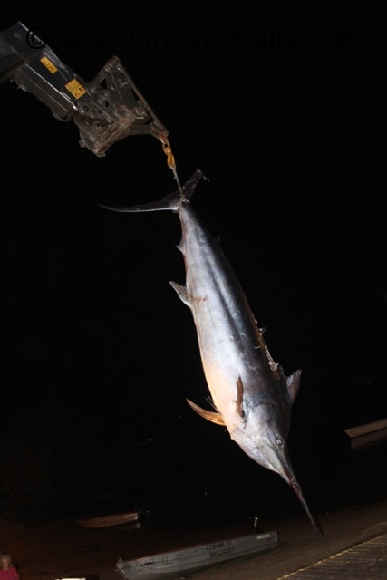 white marlin fishing
