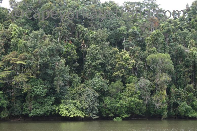 kuranda rainforest