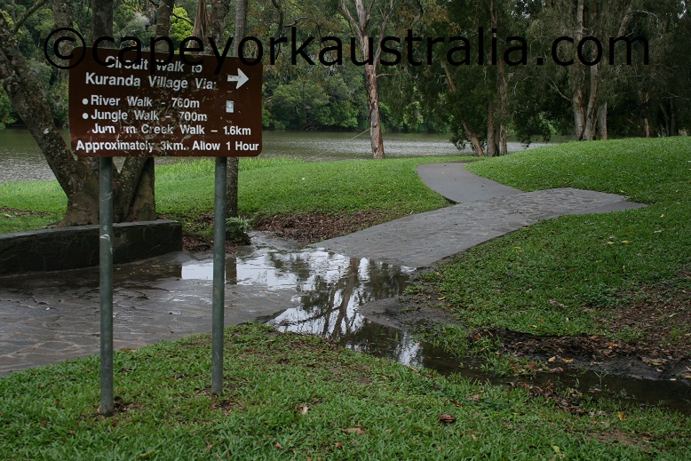 kuranda rainforest walk