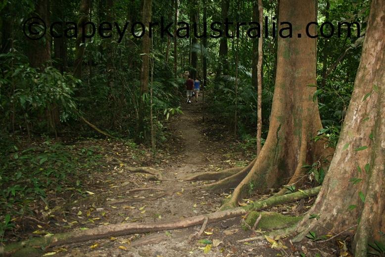 mossman gorge rainforest walk