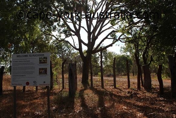 napranum scarred trees