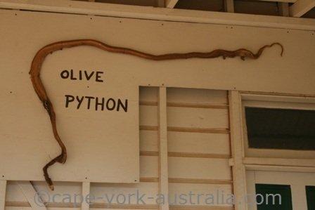 olive python skin