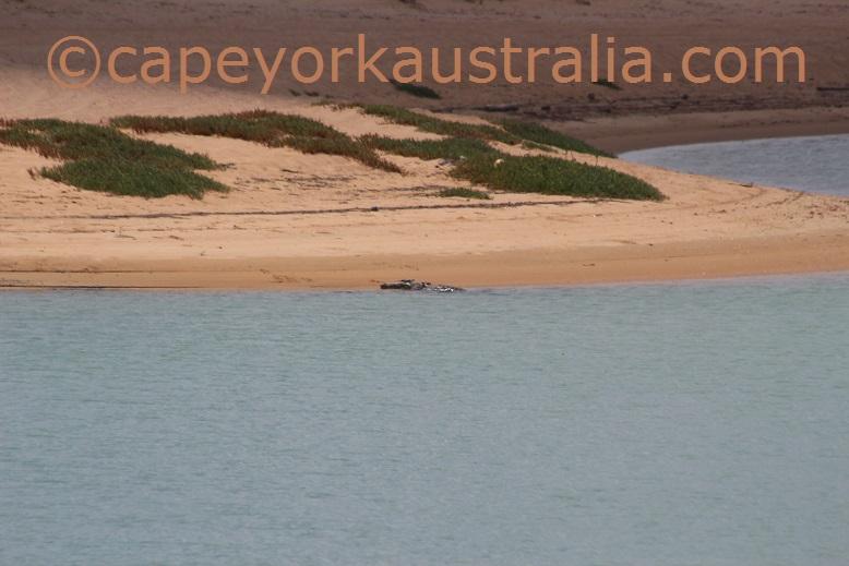 pennefather crocodile