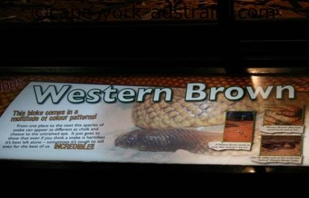 western brown